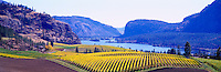 "Vineyards at ""Vaseux Lake"", South Okanagan Valley, BC, British Columbia, Canada - Vaseux Lake Migratory Bird Sanctuary - Panoramic View"