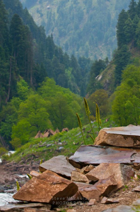 Scenic view along Kanka River, Gangabal Lake region of Kashmiri Himalayas, India.