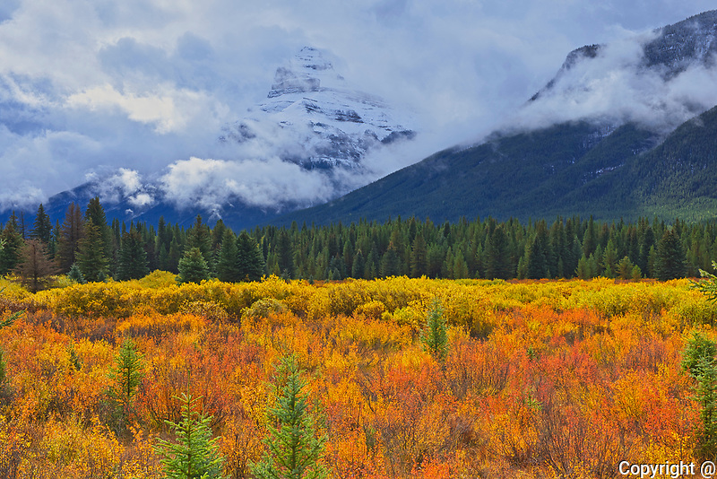 Autumn colrs at Moose Meadows in the Bow Valley<br />Banff National Park<br />Alberta<br />Canada