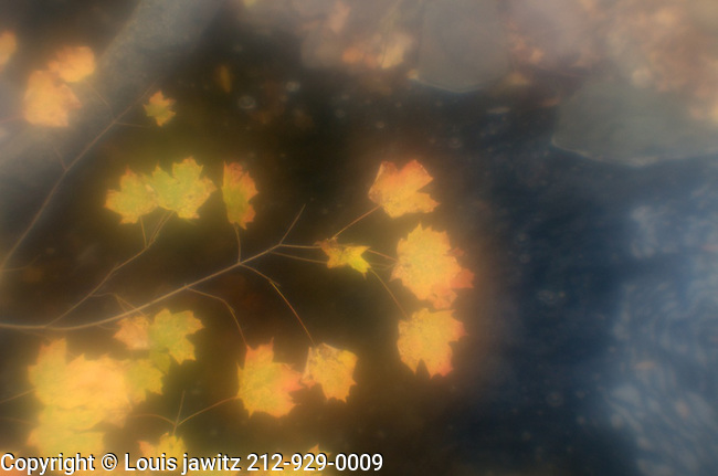 abstract, Color Image, FLOWER, leaves, leaves's,Bright, Tranquil  wk shop 2012 ab