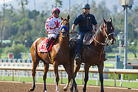 ARCADIA, CA APRIL 22:  #1 Collected ridden by Martin Garcia, in the post parade of the the Californian Stakes (Grade ll) on April 22, 2017 at Santa Anita Park in Arcadia, CA.(Photo by Casey Phillips/Eclipse Sportswire/Getty Images)
