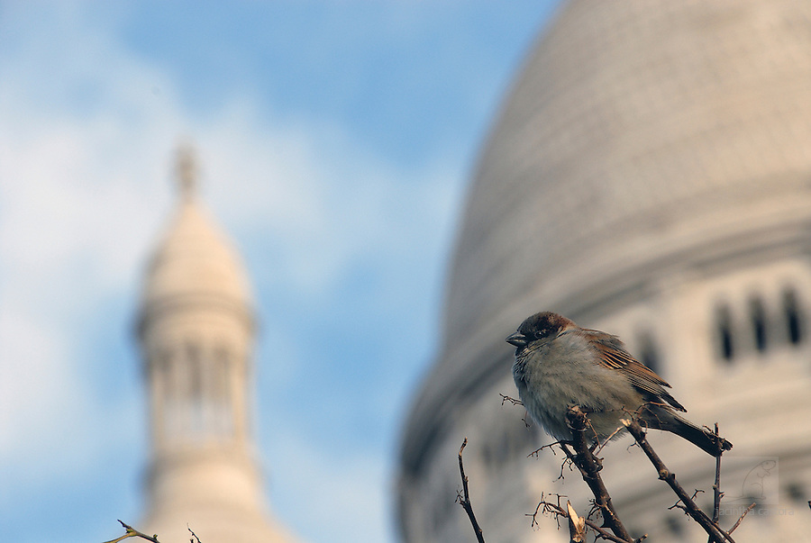 This cultural sparrow, piaf in French, I found in Paris at the Sacre Coeur