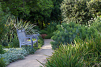 Bench by path in Kallam Perennial Garden with Euphorbia wulfenii, Mediterranean Spurge, Los Angeles County Arboretum