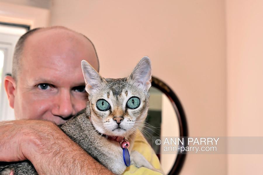 Close up of man holding Singapura cat, 2011