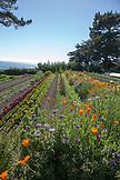 USA, California, Big Sur, Esalen, the Buddha Garden at the Esalen Institute