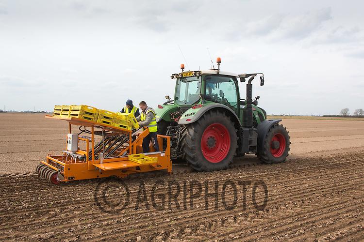 Planting fennel in the Lincolnshire fens<br /> Picture Tim Scrivener 07850 303986 <br /> scrivphoto@btinternet.com<br /> ….covering agriculture in the UK….
