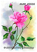 Kris, FLOWERS, BLUMEN, FLORES, paintings+++++,PLKKK3536,#f#, EVERYDAY ,rose,roses