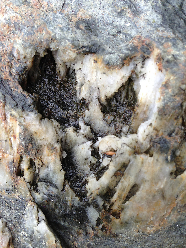 Rock Face Detail, Dyce's Head. Castine, Maine, US
