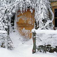 Snow lies in deep drifts up the lane and against the front door and the creeper is cloaked in icicles