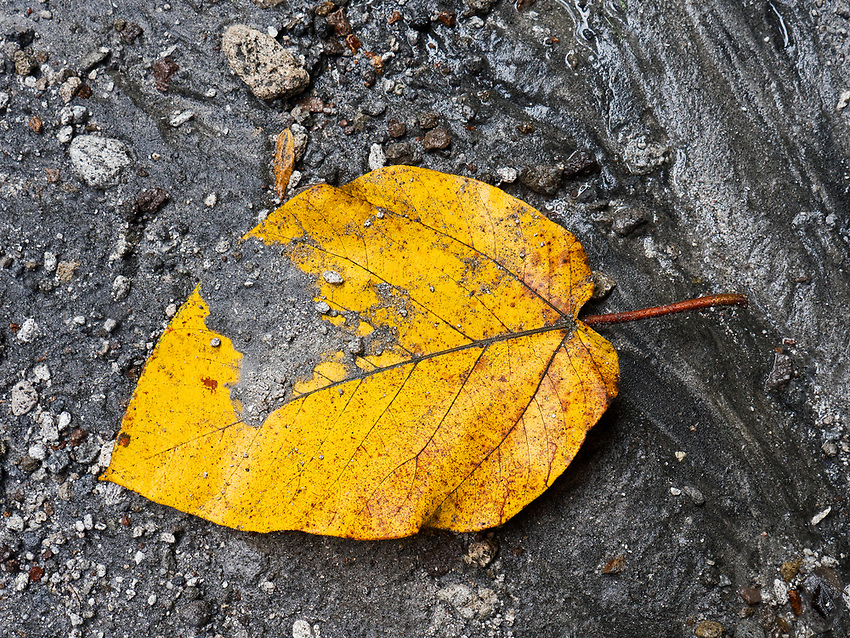 A fallen leave in lahar. Drive through gorges with towering walls of mountain and lahar, across desert- like ground of sand and ash to the the Puning Hot Springs in Pampanga, Philippines, created by Mt Pinatubo's cataclysmic eruption in 1991.