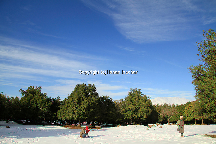 Golan Heights, snow in Odem forest