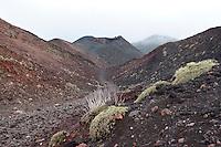 Ätna, Etna, Vulkanlandschaft mit Vulkankrater, Krater, Lavagestein, Lava, Vulkan, Italien, Sizilien, Mount Etna, birch, white birch, volcano