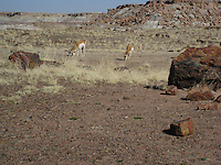 Petrified Forest National Park, Rainbow Forest Museum.