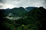 Yakushima, June 2011 - Forest near Yakusugi Cedar Land in Yakushima..The highest mountain in Yakushima reaches 1936m.
