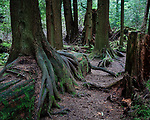 Regeneration - details and vignettes of the Pacific Northwest rainforest