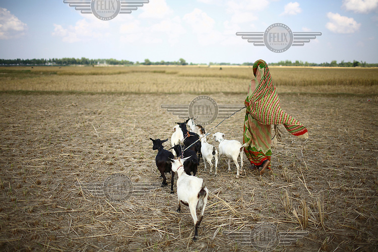 30 year old Norokul Begum with the goats she was able to buy thanks to a microfinance loan from IFAD (International Fund for Agricultural Development)...