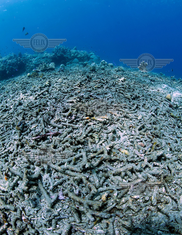 A patch of sea floor with what appears to be dead corals. Corals are highly sensitive to environmental changes. The North coast of Bali has faced  destructive fishing methods as well as increased water temperatures.