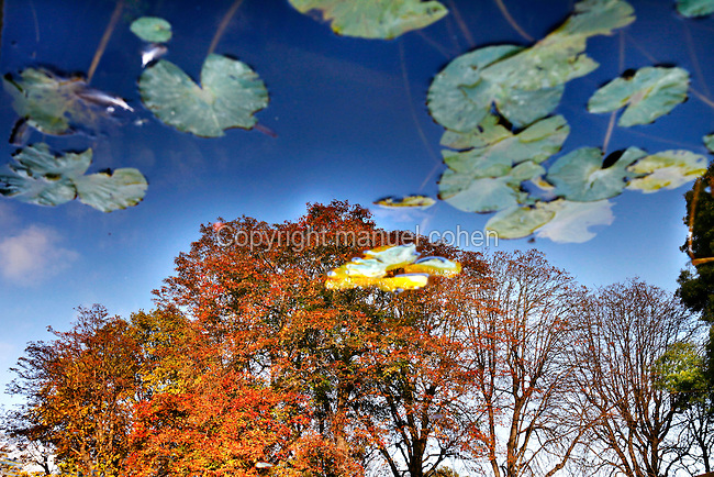 Reflection of autumnal colors of foliage and blue sky in a pool with water-lilies in the Jardin de l'Ecole de Botanique (garden of the botanical school), Jardin des Plantes, Paris, 5th arrondissement, France. Founded in 1626 by Guy de La Brosse, Louis XIII's physician, the Jardin des Plantes, originally known as the Jardin du Roi, opened to the public in 1640. It became the Museum National d'Histoire Naturelle in 1793 during the French Revolution. Picture by Manuel Cohen