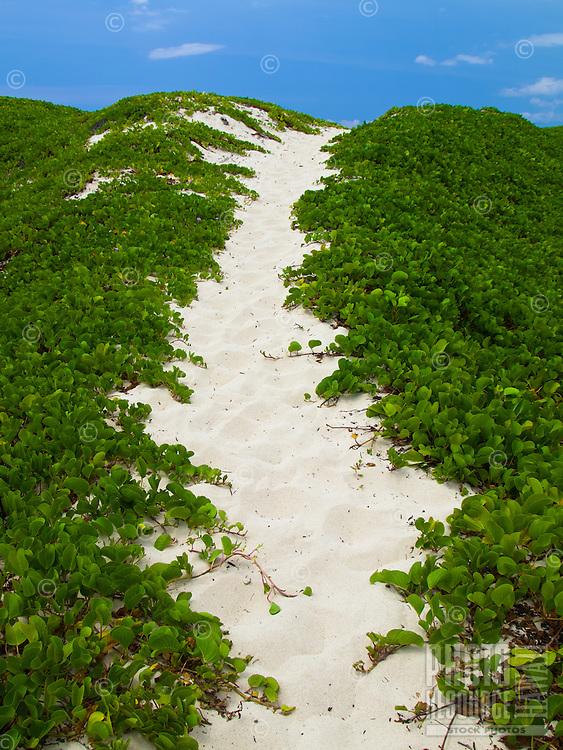A sandy trail between naupaka leads to Makalawena Beach, Big Island.