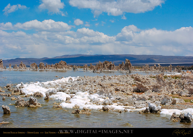 Alkaline Foam, South Tufa in Spring, Mono Lake, Lee Vining, California