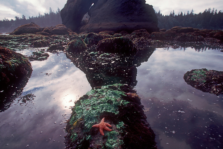 Tidepool, Olympic National Park, Sea stacks, Shi Shi Beach, Point of the Arches, Washington State Pacific Northwest, Pacific Ocean, USA, sea star, Point of Arches was originally purchased for preservation by The Nature Conservancy,.