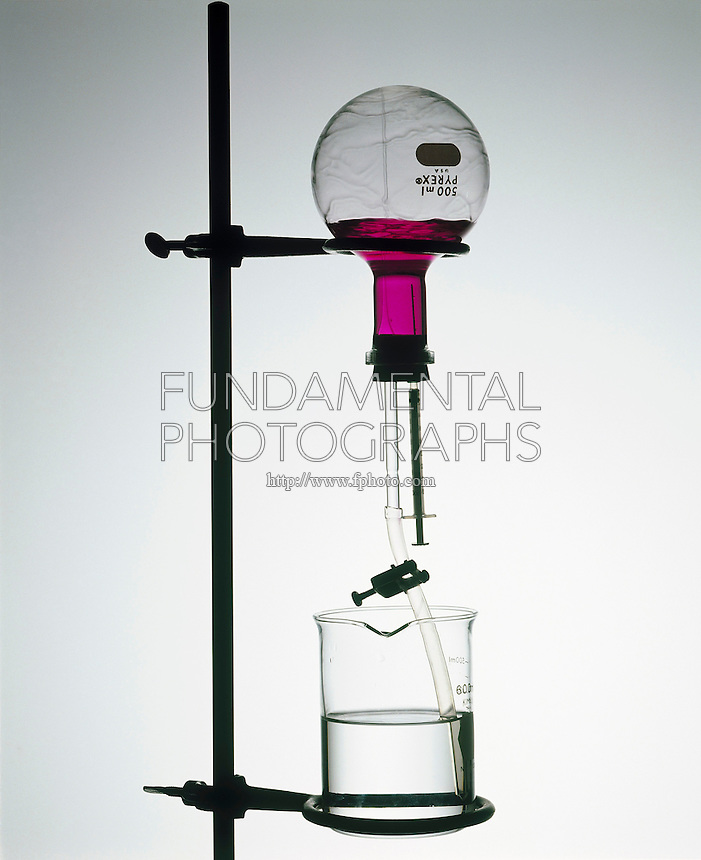 AMMONIA FOUNTAIN WITH PHENOLPHTHALEIN INDICATOR<br /> Water Injected Into Flask Filled With NH3 Gas<br /> The extreme solubility of ammonia gas creates a pressure drop which drives the water/indicator solution (clear)  in  beaker  into the flask by atmospheric pressure, creating a fountain effect &amp; turning magenta  with the formation of OH- ions