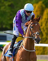 Cosmopolitan Queen ridden by David Probert goes down to the start of The Penang Turf Club Malaysia Handicap (Class 5)   during Afternoon Racing at Salisbury Racecourse on 17th May 2018