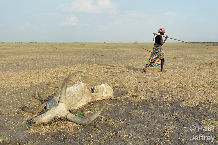 A woman walks by a dead cow in Dong Boma, a Dinka village in South Sudan's Jonglei State, on April 12, 2017. Most villagers recently returned home after being displaced by rebel soldiers in December, 2013, and they face serious challenges in rebuilding their village while simultaneously coping with a drought which has devastated their herds.<br /> <br /> The Lutheran World Federation, a member of the ACT Alliance, is helping villagers restart their lives with support for housing, livelihood, and food security.