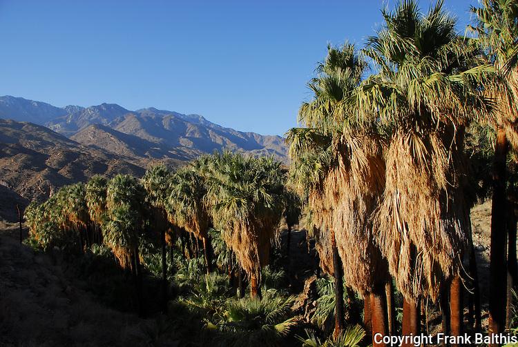 Indian Canyons and the San Jacinto Mountains