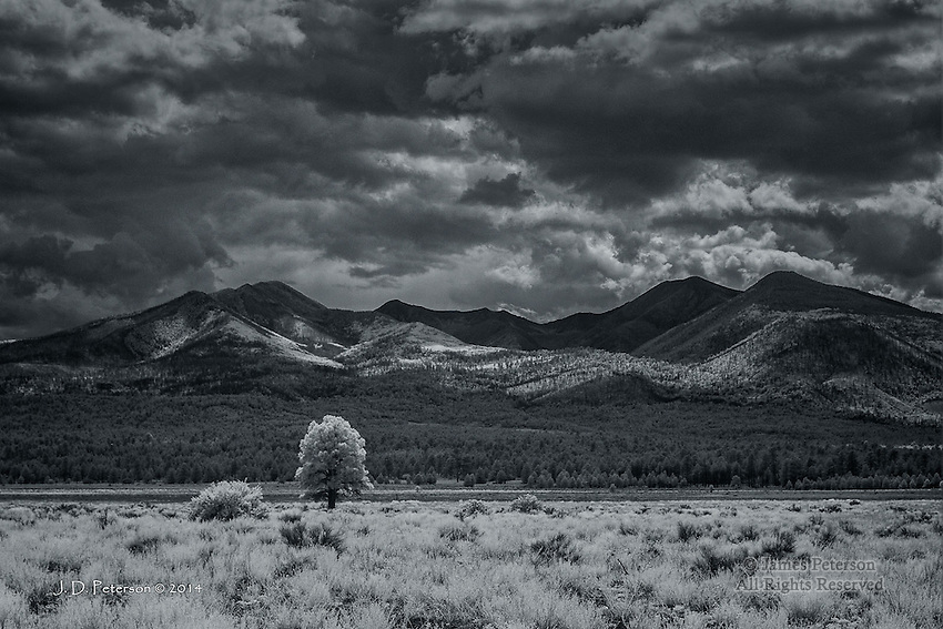 Lone Ponderosa with San Francisco Mountains, Arizona