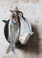 Europe/France/Bretagne/29/Finistère: Bar de Ligne - Stylisme : Valérie LHOMME //    France, Finistere,  line-caught sea bass