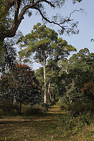 20080201_Periyar, India_ A view of the plant diversity of the woods of the Periyar Wildlife Sancuary in the Southern Indian state of Kerala.  Photographer: Daniel J. Groshong/Tayo Photo Group
