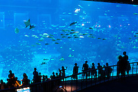 Panoramic marine viewing panel at the SEA Aquarium, Sentosa, Singapore