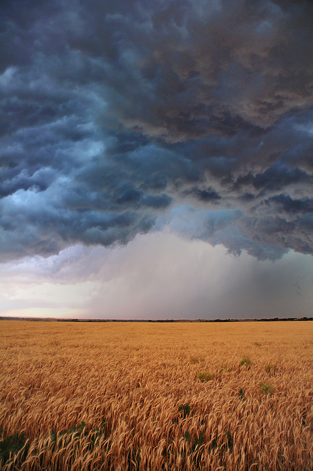 Ragged and turbulent clouds boil above a field of golden wheat as a severe thunderstorm advances across southwest Oklahoma in June.