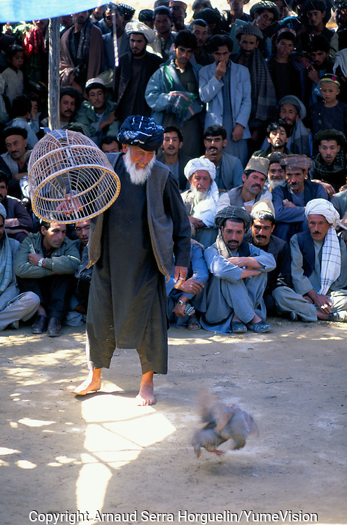 Early Friday morning, hundred of mens are meeting to gamble on partridge fight in a park of Meymaneh in Afghanistan. The birds cost up to £300.