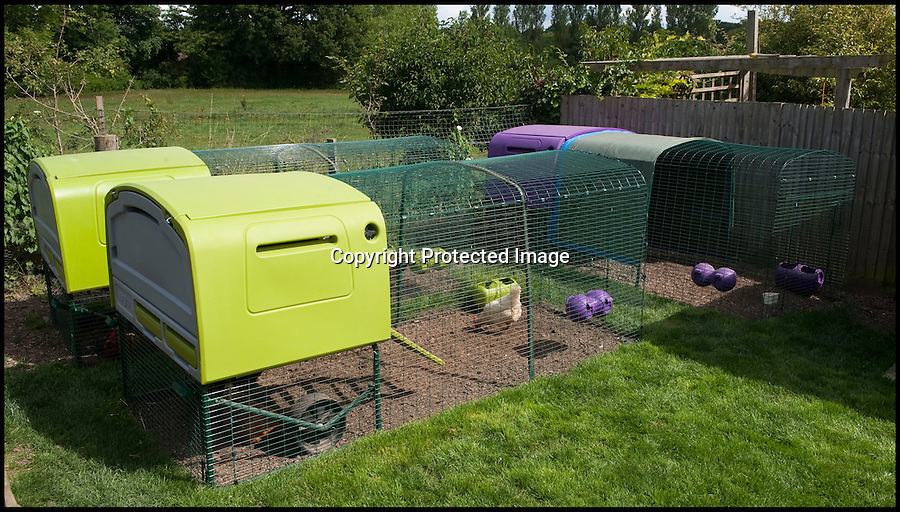 BNPS.co.uk (01202 558833)<br /> Pic: PhilYeomans/BNPS<br /> <br /> Free range Eglu coops.<br /> <br /> Fowlty Towers - Egg-ceptional new hotel for hens.<br /> <br /> The boom in hen keeping across Britain has led a canny Kent lady to spotting a gap in the market for a deluxe hotel for punters beloved poultry whilst they jet off on their summer hols. <br /> <br /> Julie Smith from Cowden is inundated with requests for 'rooms' at 'Fowlty Towers', with customers booking months in advance to secure a spot for their prized birds. <br /> <br /> Julie's all-inclusive resort costs a poultry £7 a night for each run, with round the cluck service including all food and drink.