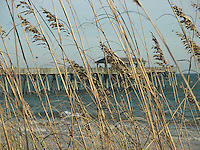 Sea oats and pier