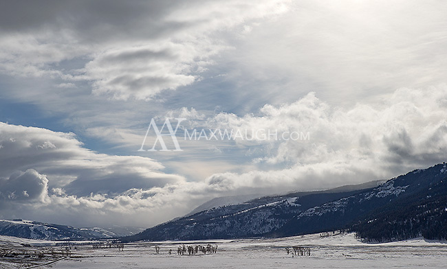 The Lamar Valley on a winter day.