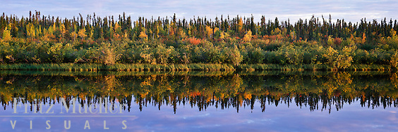 Fall foliage in the boreal forest in North yukon