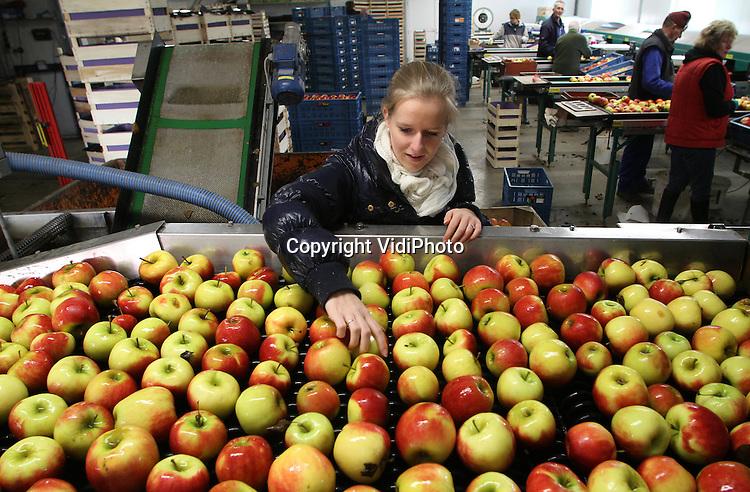 Foto: VidiPhoto..ANDELST - Met man en macht verwerkt personeel van fruitteler Jan van Olst uit Andelst in de Betuwe maandag een spoedbestelling voor 10 ton elstar appels. Het fruit is voor zowel de binnenlandse en buitenlandse markt bestemd. Nu er met de verkoop van appels uit de koelcel nauwelijks iets te verdienen is door de enorme oogst van afgelopen jaar, moet Van Olst het vooral ook hebben van sorteerwerk. Hij sorteert het fruit van diverse fruittelers uit de omgeving. Zelf heeft hij nog zo'n 400 ton appels op voorraad staan. Nederlanders kochten in 2011 bijna 10 procent minder appels..
