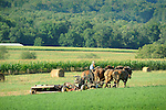 Amishman mowing alfalfa with four horse team. Nippenose Valley.