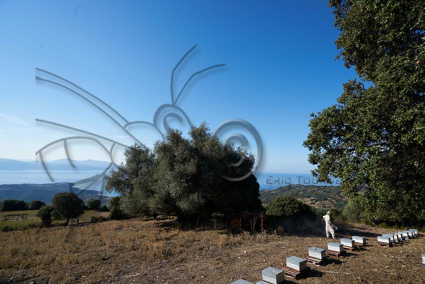 Apiary in Corsica: Near Carg&egrave;se, view of an apiary belonging to Mattei Jean-Nicolas, a beekeeper in Corsica not far from the sea. <br /> Pr&egrave;s de Carg&egrave;se, vue d&rsquo;un rucher de Mattei Jean-Nicolas, apiculteur en Corse &agrave; proximit&eacute; de la mer.