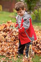 Boy raking leaves
