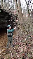 NWA Democrat-Gazette/FLIP PUTTHOFF<br /> Joe Neal looks at vegetation Dec. 1, 2015 along Tanyard Creek Nature Trail.