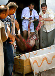 Iraqis load a body into a coffin at the morgue in Baqubah.  Over 50 people were killed and over 50 more were injuried when a  bomb detonated near a police recruiting center in Baqubah.  Photo taken Wednesday, July 28, 2004..Star-Telegram/Khampha Bouaphanh