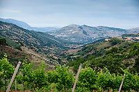 Baglio di Pianetto vineyard, Sicily, Italy