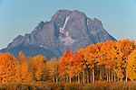 Fall color at Oxbow Bend in Grand Teton National Park.