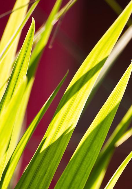 Spring light and colour, Backlit Grass