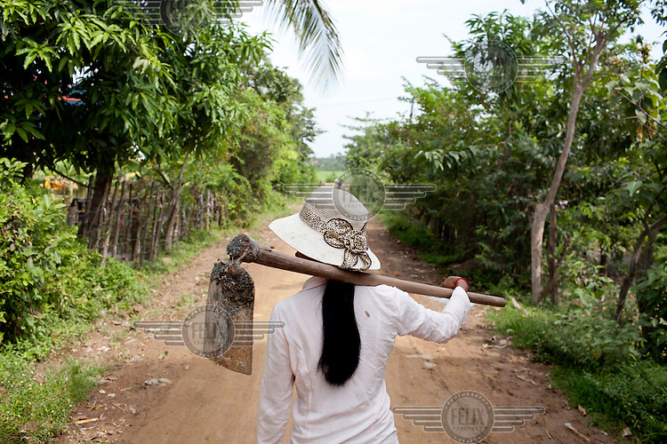 In Krang Lahiong village, where she is deputy chief, Meas Sophea walks to her paddy, she is a rice farmer that has employed the SRI (System of Rice Intensification) which is an official rice production method endorsed by the Cambodian government. It is credited in doubling the country's total rice output in the last decade.