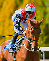 """Brancaster ridden by David Probert goes down to the start of The Willton Homes """"Confined"""" Novice Stakes (Colts & Geldings)  during Afternoon Racing at Salisbury Racecourse on 17th May 2018"""